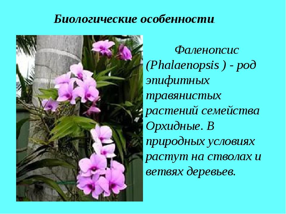 Фаленопсис (Phalaenopsis ) - род эпифитных травянистых растений семейства Ор...