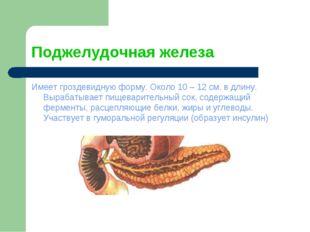 Поджелудочная железа Имеет гроздевидную форму. Около 10 – 12 см. в длину. Выр