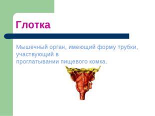 Глотка Мышечный орган, имеющий форму трубки, участвующий в проглатывании пище