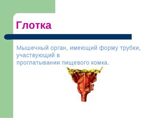 Глотка Мышечный орган, имеющий форму трубки, участвующий в проглатывании пище...