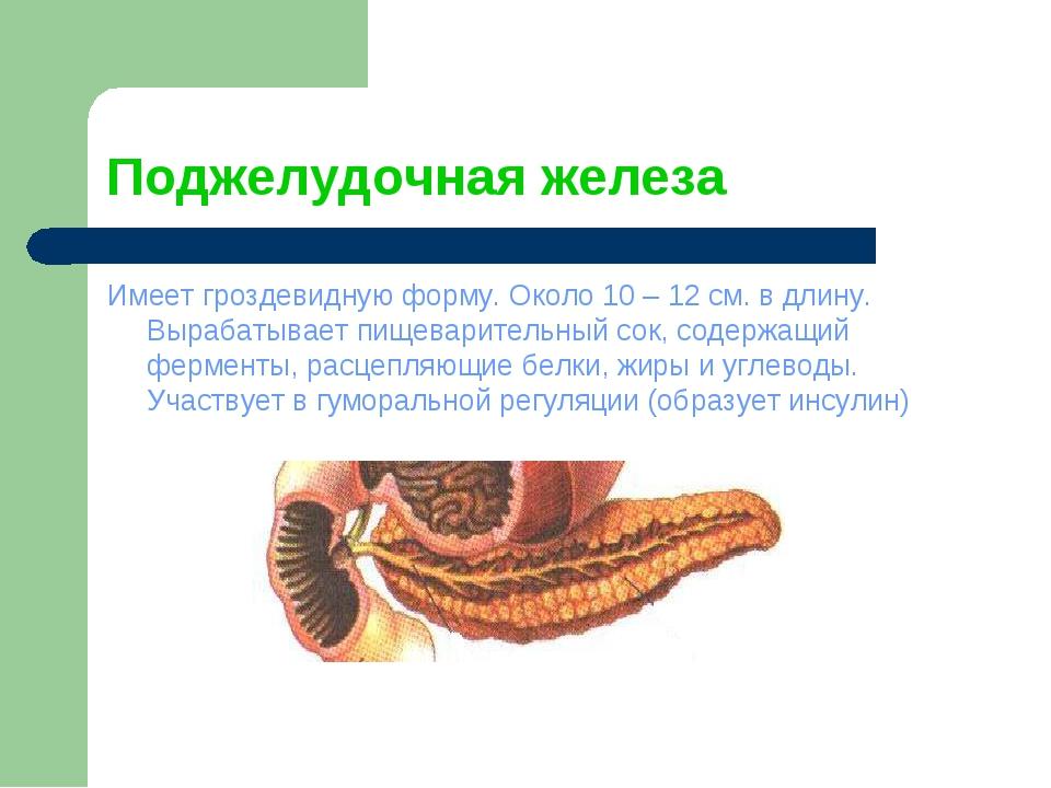 Поджелудочная железа Имеет гроздевидную форму. Около 10 – 12 см. в длину. Выр...