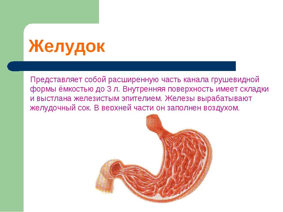 Желудок Представляет собой расширенную часть канала грушевидной формы ёмкость...