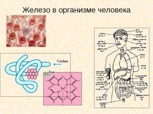 Железо в организме человека