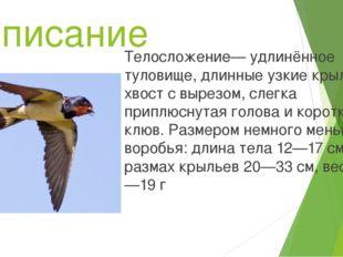 Описание Телосложение— удлинённое туловище, длинные узкие крылья, хвост с выр