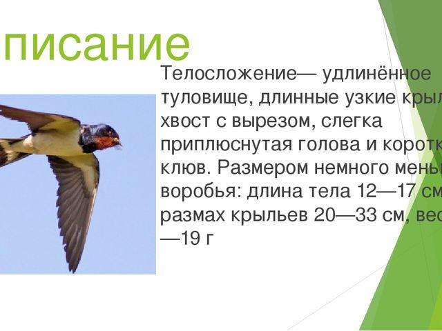 Описание Телосложение— удлинённое туловище, длинные узкие крылья, хвост с выр...