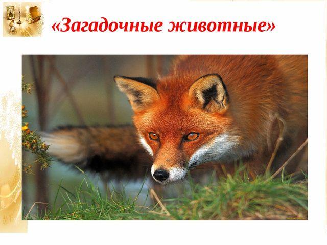 «Загадочные животные»