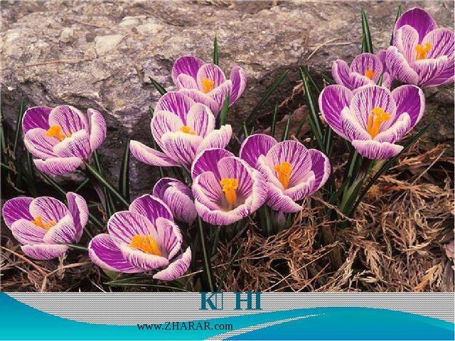 22 Наурыз – ҰЛЫСТЫҢ ҰЛЫ КҮНІ www.ZHARAR.com