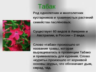 Табак Род однолетних и многолетних кустарников и травянистых растений семейст