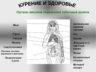 Мозг Горло Сердце Печень Надпочечники Половая система (мужская и женская) По