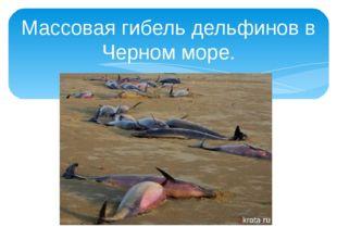 Массовая гибель дельфинов в Черном море.