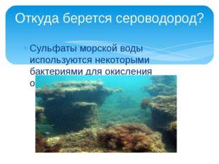 Сульфаты морской воды используются некоторыми бактериями для окисления органи