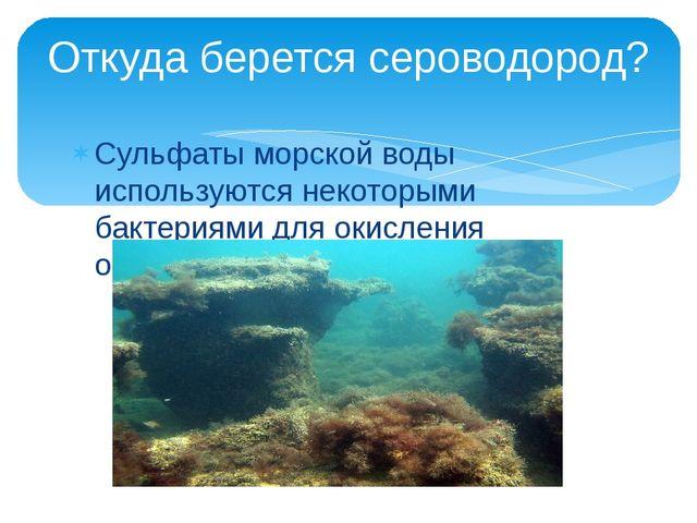 Сульфаты морской воды используются некоторыми бактериями для окисления органи...