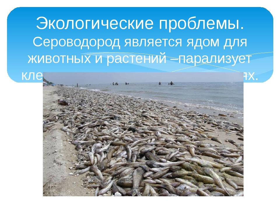 Экологические проблемы. Сероводород является ядом для животных и растений –па...