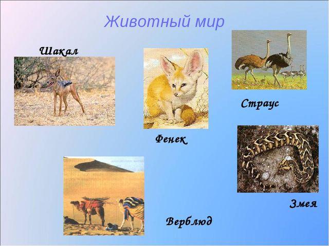Животный мир Шакал Змея Верблюд Фенек Страус