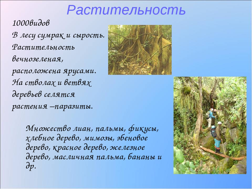 Растительность 1000видов В лесу сумрак и сырость. Растительность вечнозеленая...