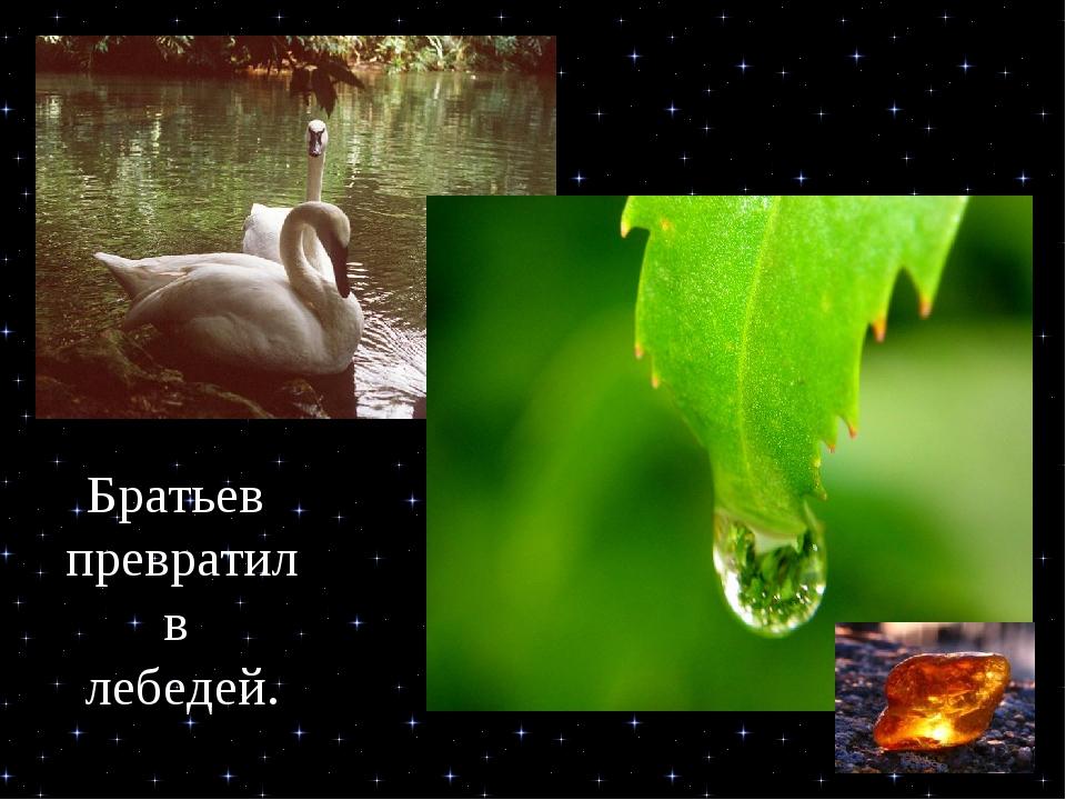 Сестер превратил в Ивы Братьев превратил в лебедей.