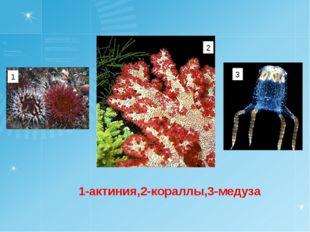 1-актиния,2-кораллы,3-медуза 1 2 3