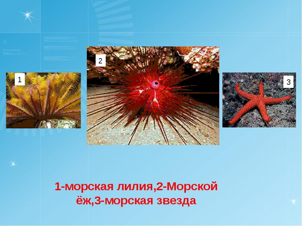1-морская лилия,2-Морской ёж,3-морская звезда 1 2 3