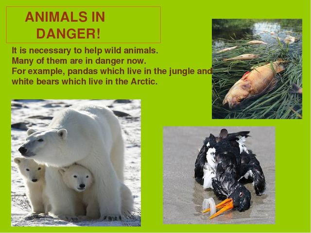 ANIMALS IN DANGER! It is necessary to help wild animals. Many of them are in...