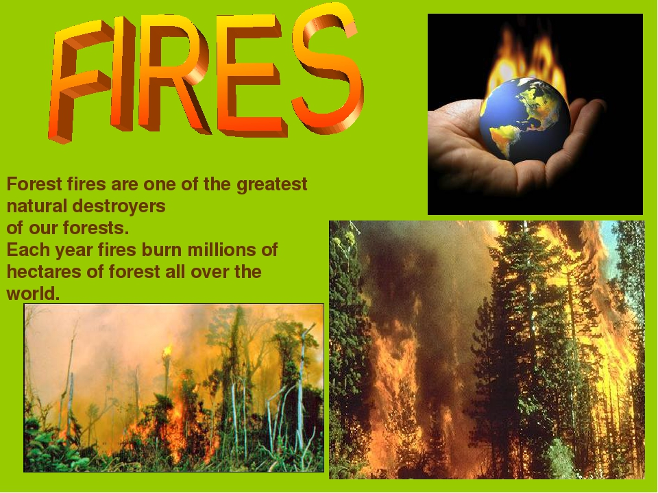 Forest fires are one of the greatest natural destroyers of our forests. Each...