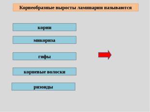 Хроматофор – это крупный хлоропласт с пигментом ризоидальная клетка хромоплас