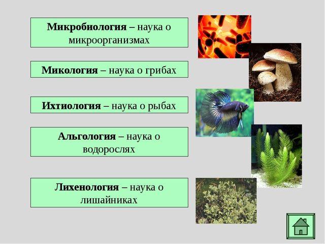 Хламидомонада - род микроскопических одноклеточных зеленых водорослей грушеви...