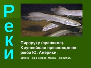 Пираруку (арапаима). Крупнейшая пресноводная рыба Ю. Америки. Длина – до 4 ме