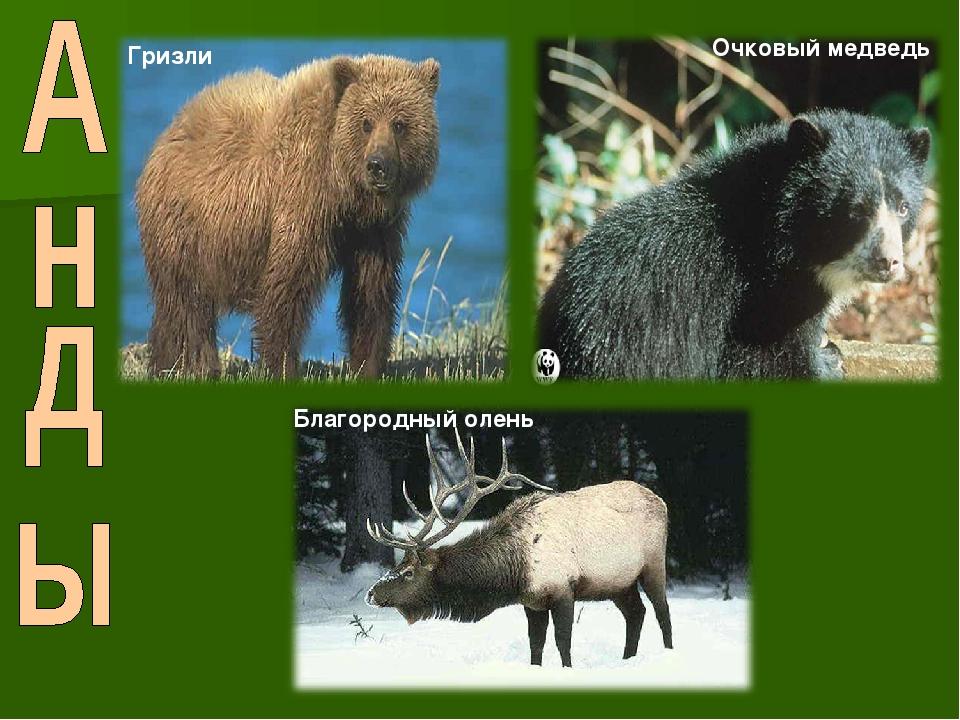 Гризли Очковый медведь Благородный олень