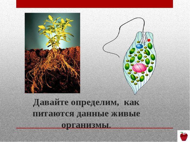 Давайте определим, как питаются данные живые организмы.