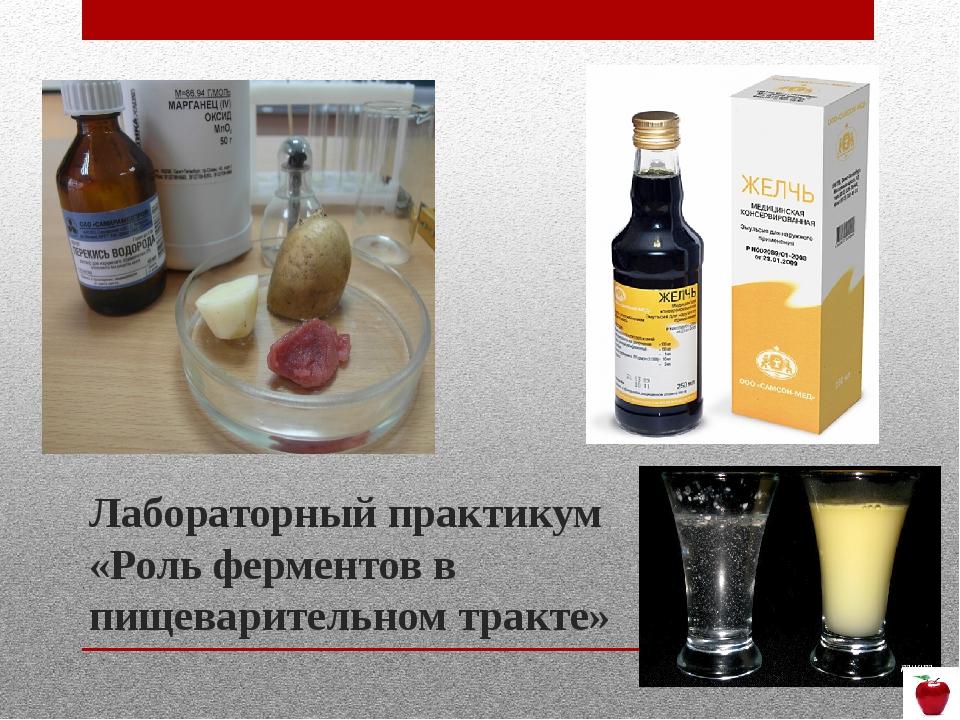 Лабораторный практикум «Роль ферментов в пищеварительном тракте»