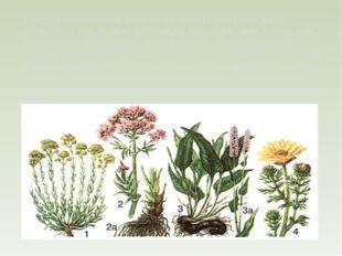 Природа предоставляет человеку огромное разнообразие даров, лекарства от все