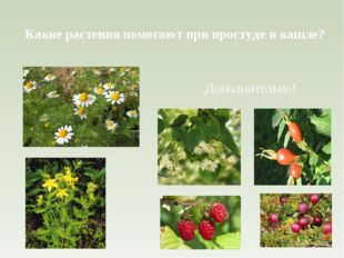 Какие растения помогают при простуде и кашле? Дополнительно!