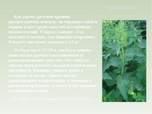Как сорное растение крапива распространена повсюду: на окраинах садов и парк