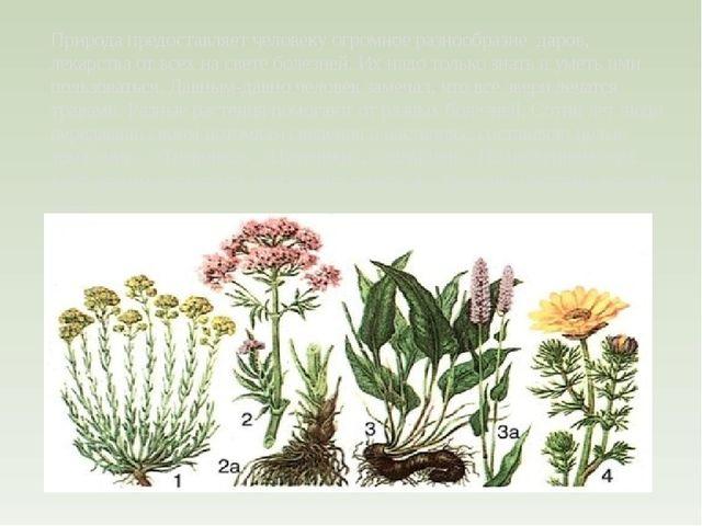 Природа предоставляет человеку огромное разнообразие даров, лекарства от все...