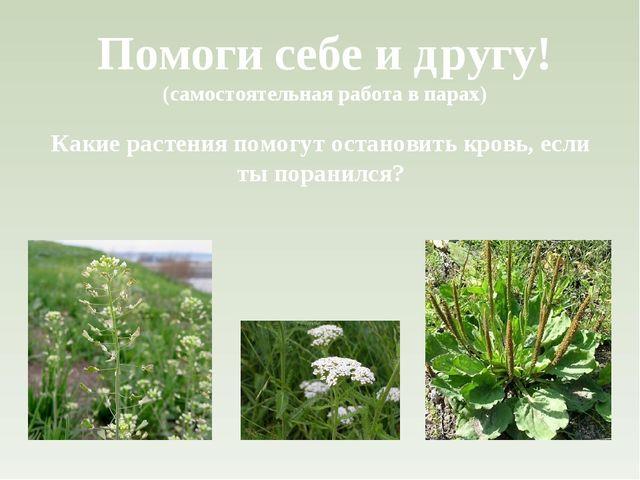 Помоги себе и другу! (самостоятельная работа в парах) Какие растения помогут...
