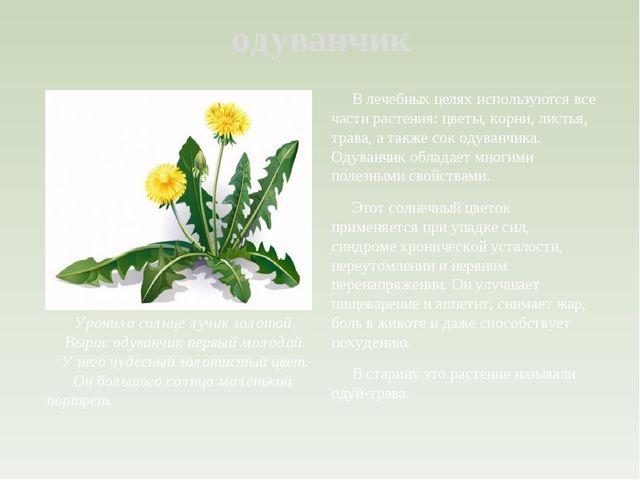 одуванчик В лечебных целях используются все части растения: цветы, корни, лис...