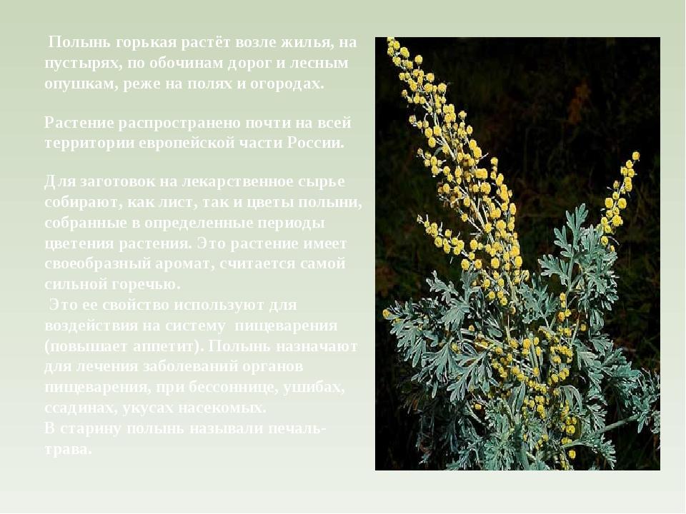 Для заготовок на лекарственное сырье собирают, как лист, так и цветы полыни,...