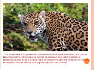 Это, почитаемое в древности, животное в наше время находится в списке Красно