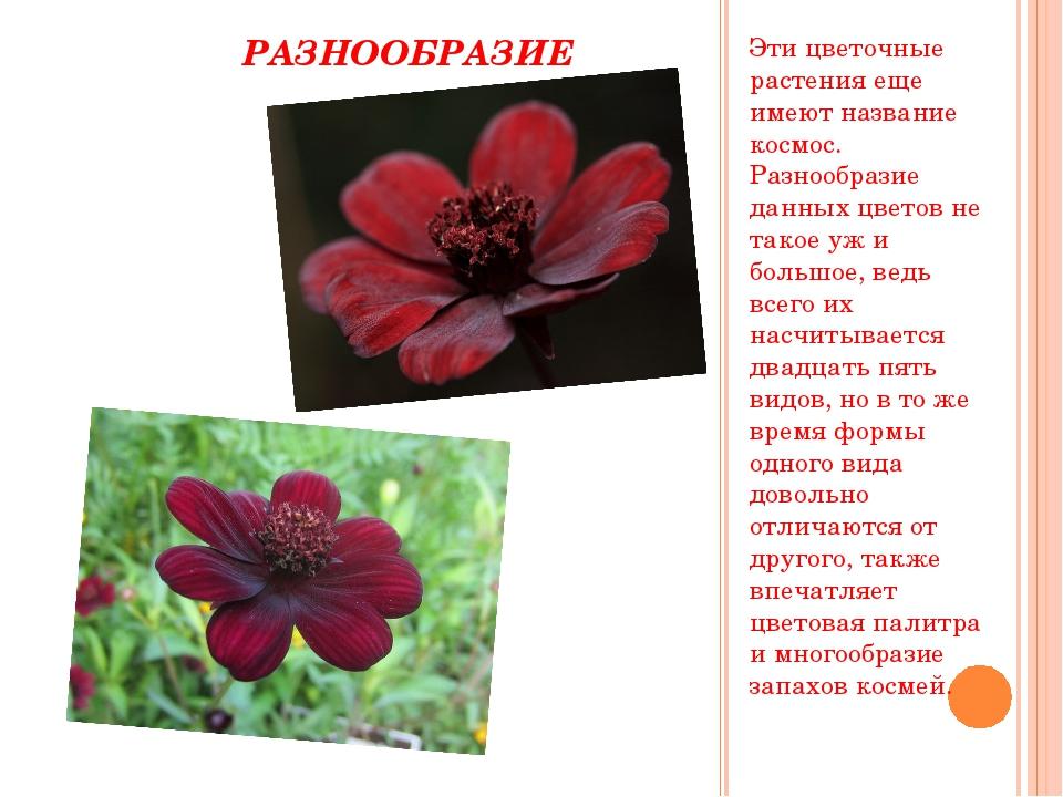 РАЗНООБРАЗИЕ Эти цветочные растения еще имеют название космос. Разнообразие...