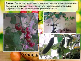 Вывод: Вырастить здоровые и вкусные растения зимой возможно без химии и стиму