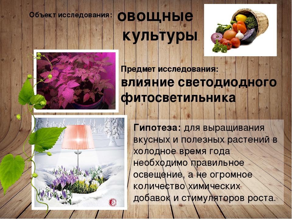 Объект исследования: овощные культуры Предмет исследования: влияние светодиод...