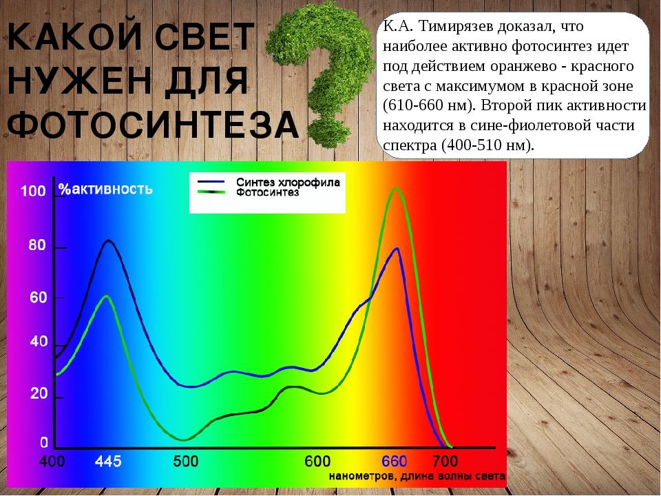 КАКОЙ СВЕТ НУЖЕН ДЛЯ ФОТОСИНТЕЗА К.А. Тимирязев доказал, что наиболее активн...