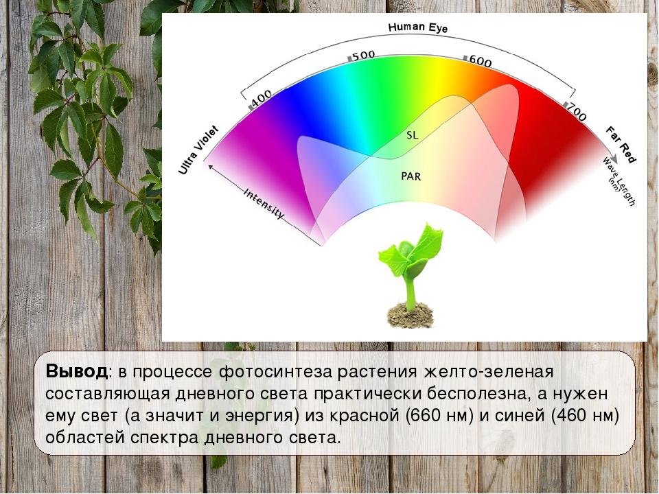 Вывод: в процессе фотосинтеза растения желто-зеленая составляющая дневного св...