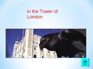 in the Tower of London