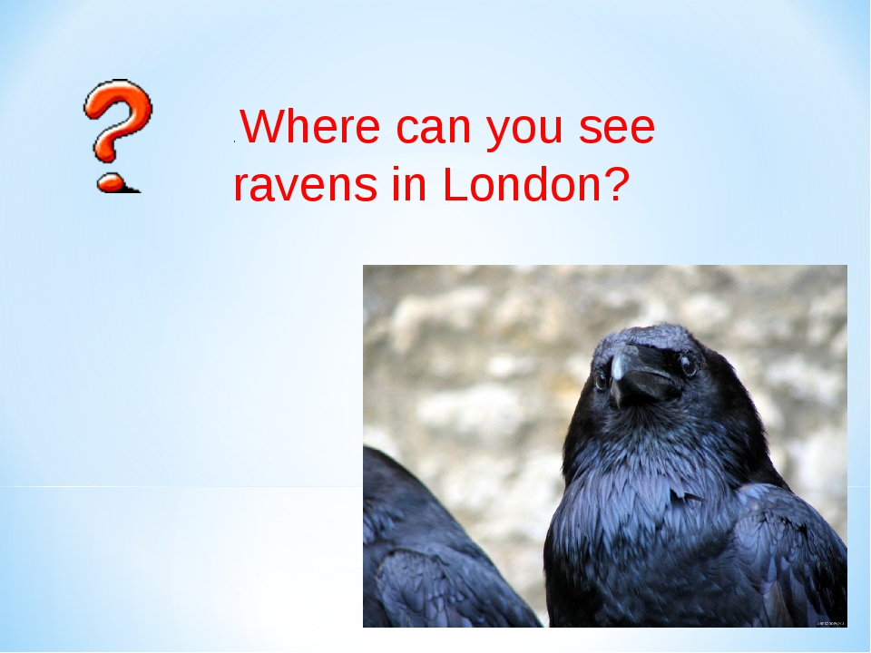 ОТВЕТ . Where can you see ravens in London?