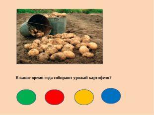 В какое время года собирают урожай картофеля?