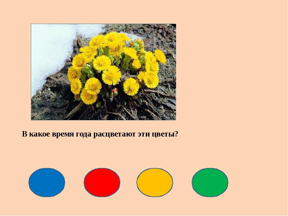 В какое время года расцветают эти цветы?