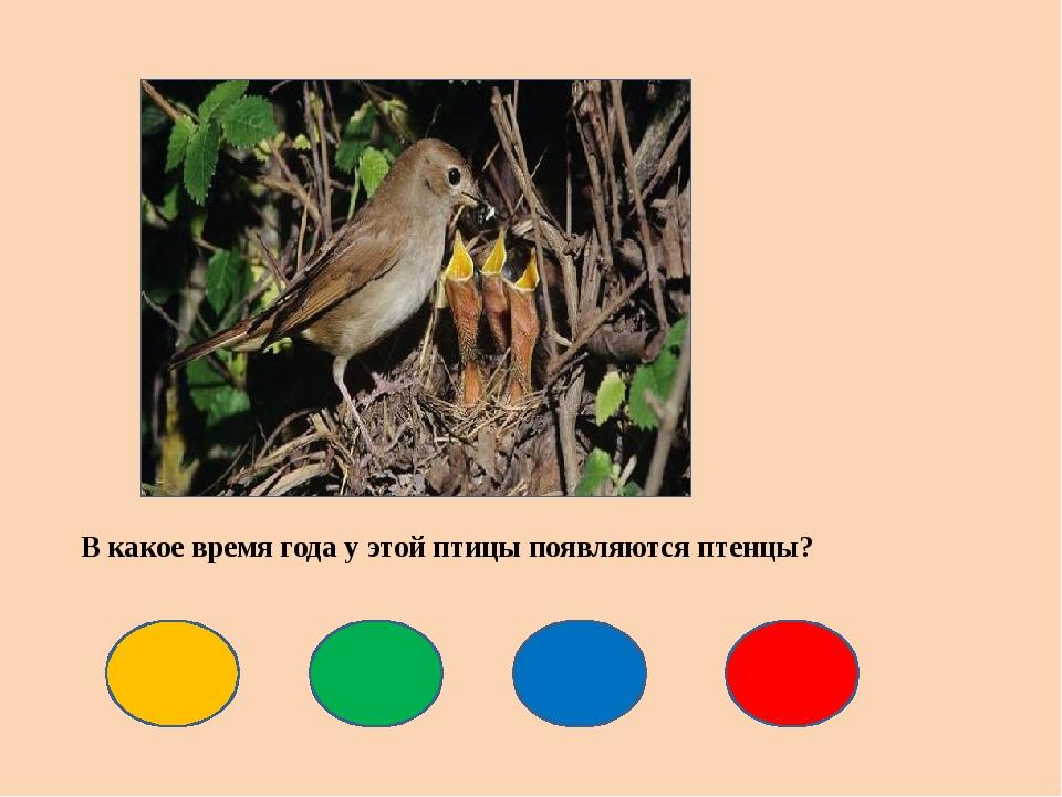 В какое время года у этой птицы появляются птенцы?