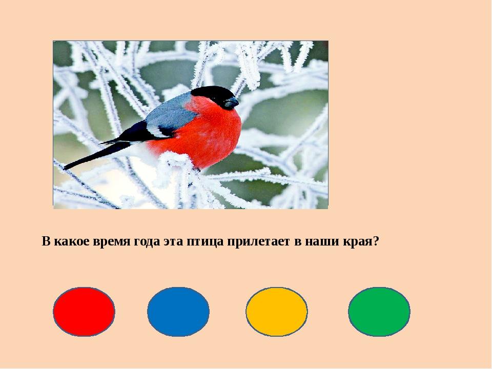 В какое время года эта птица прилетает в наши края?