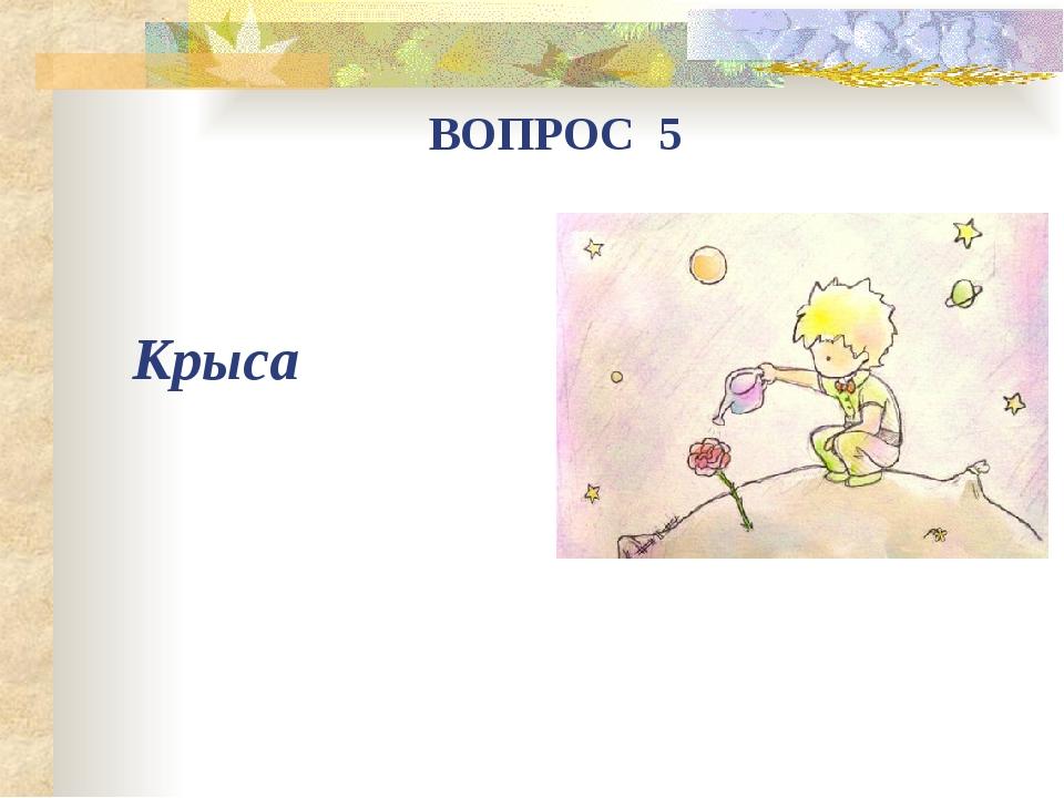 Крыса ВОПРОС 5